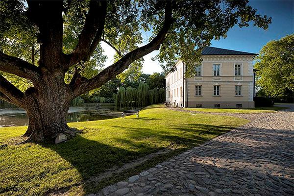 Klon polny najstarszy pomnik przyrody w parku w Dobrzycy