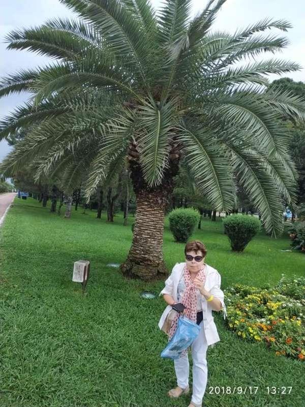 7D Batumi aleje palmowe-800