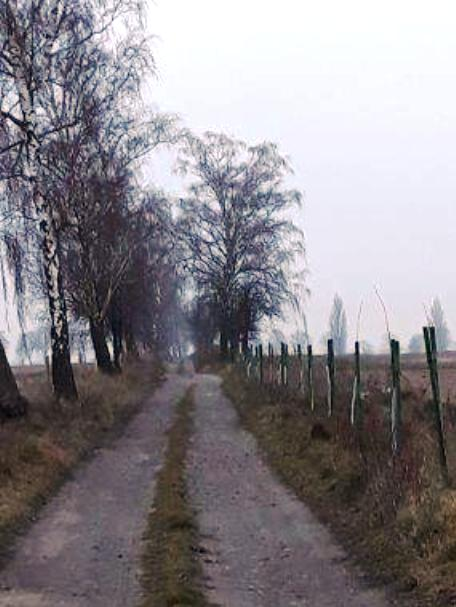 droga-skrzypnia2-czolo.jpg